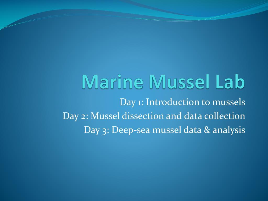 marine mussel lab l.