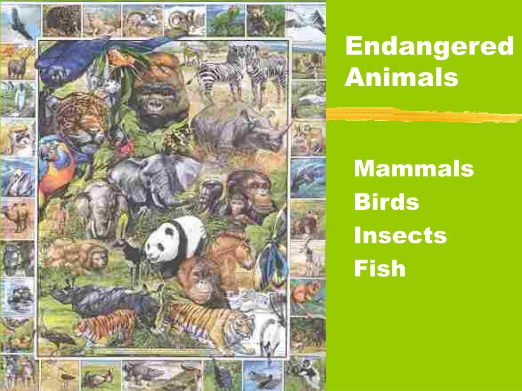 endangered animals l.