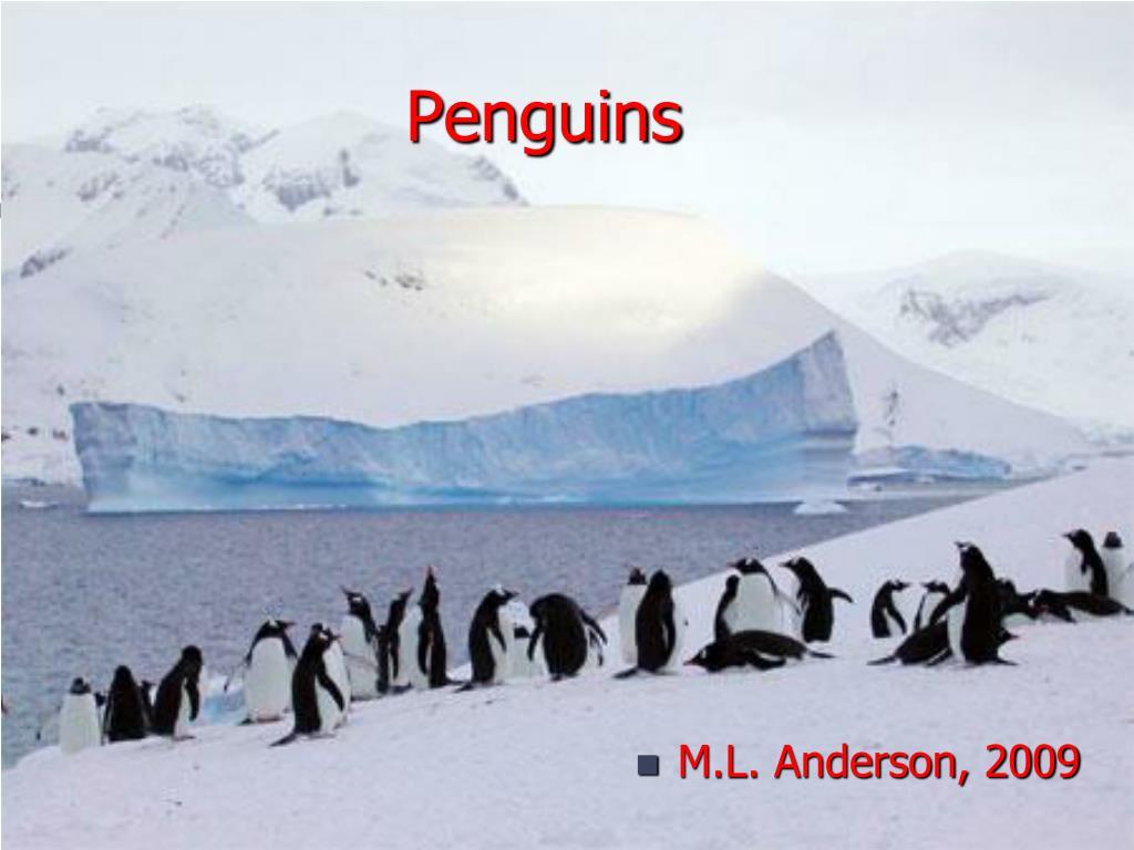 penguins l.