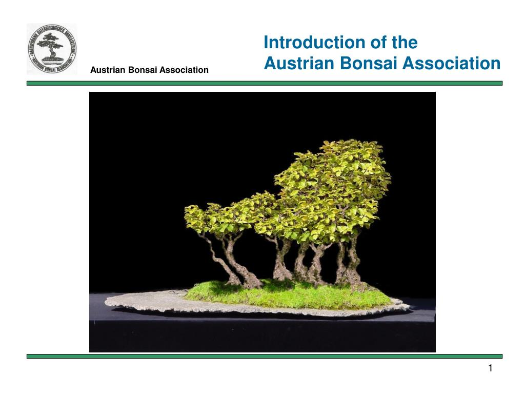 austrian bonsai association l.
