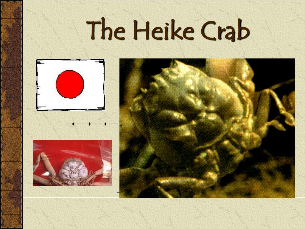 the heike crab l.