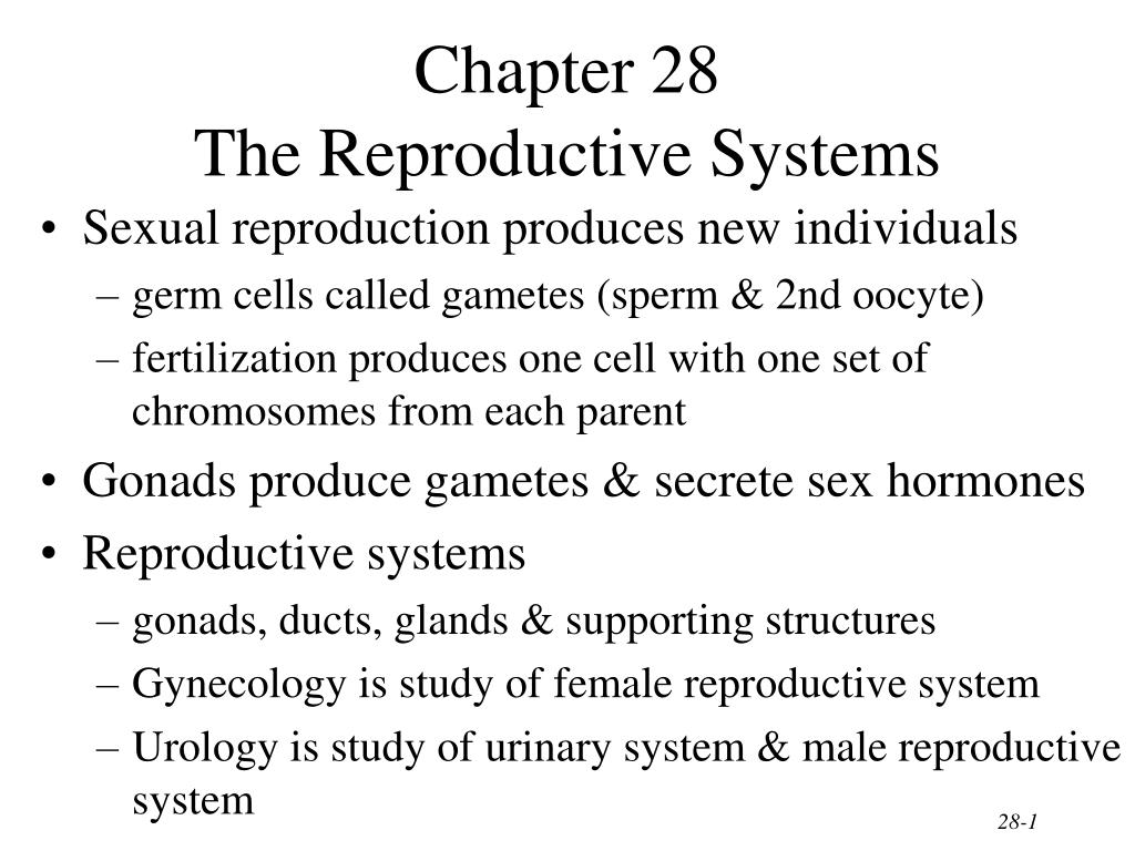 chapter 28 the reproductive systems l.
