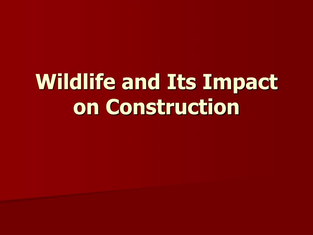 wildlife and its impact on construction l.