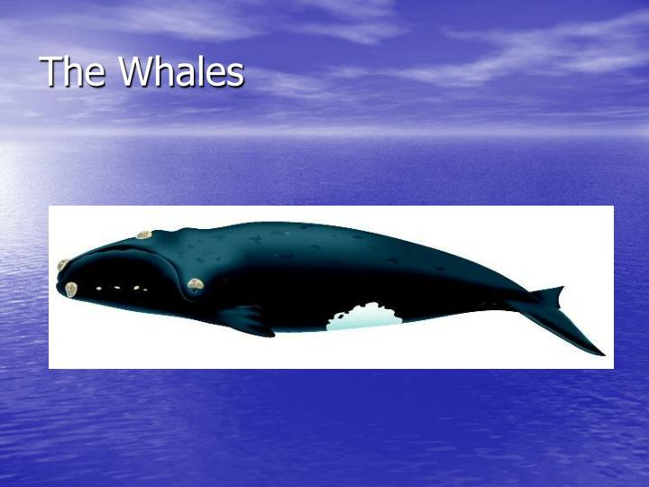 the whales n.